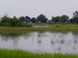 Flooded Kalimbeza